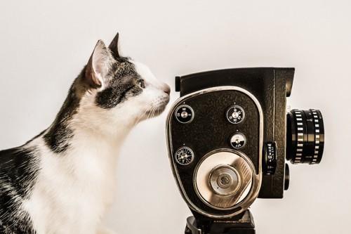 ブンテージカメラを覗く猫