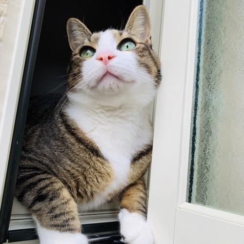 窓の外をながめる猫