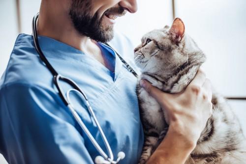 獣医師に抱かれる猫