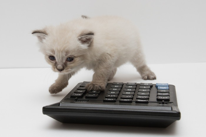 子猫と電卓