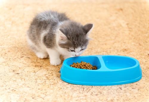 キャットフードのにおいを嗅ぐ子猫