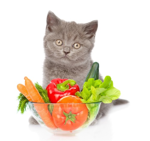 野菜と仔猫