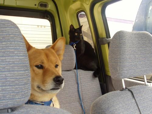 ドライブへ