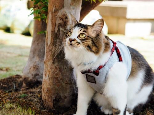 狩りを楽しむ猫15540