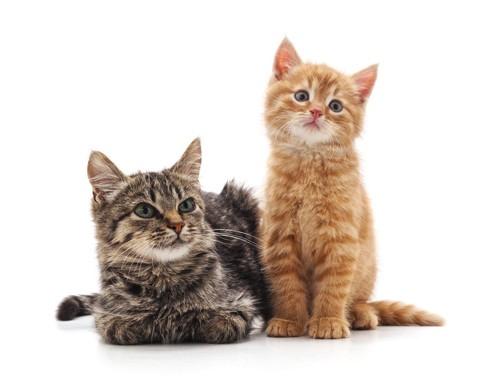 黒茶猫二匹
