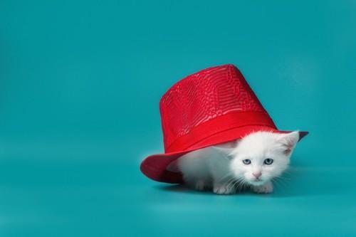 帽子の下の子猫