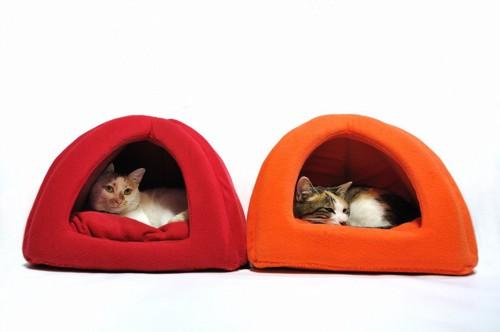 小屋で寝る猫