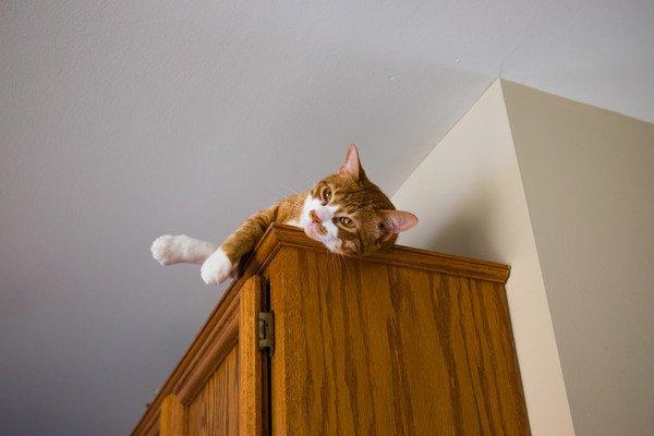 高い所棚の上にいる猫