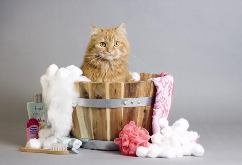 桶に入る猫とお風呂用品