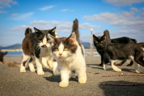 逞しい子猫たち