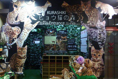 猫カフェ ヒョウ猫の森の店内全景