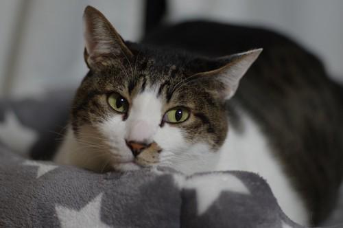 目をそらしている猫