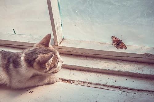 虫に夢中な猫