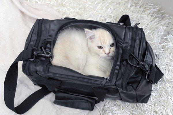黒いキャリーバッグに入る白い猫
