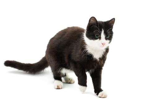 部分的に白色が入った黒猫