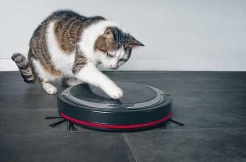 ロボット型掃除機に手を伸ばす猫