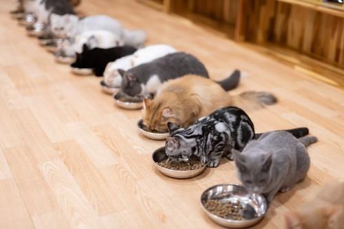 それぞれのお皿で食べる猫達