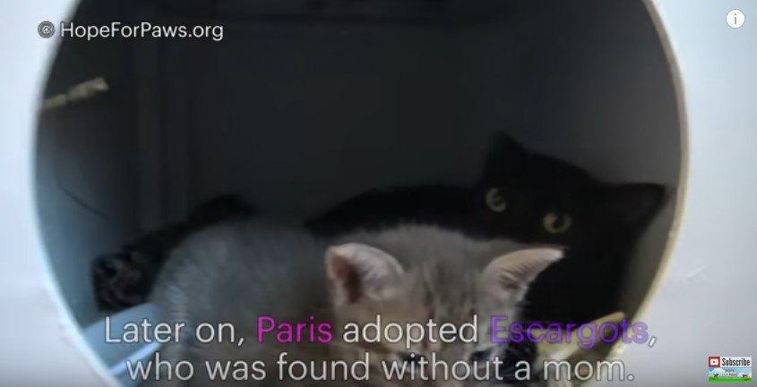箱の中の黒猫と子供