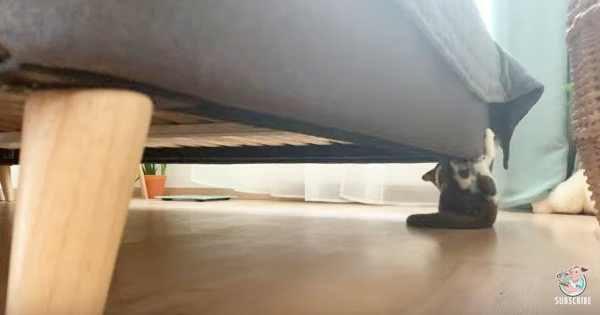 ソファの角にしがみつく子猫