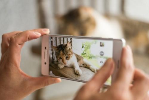 スマートフォンで写真を撮られる猫