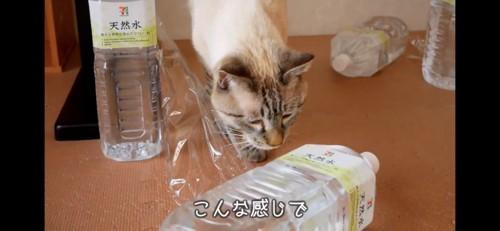 倒れたペットボトルと猫