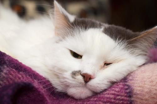 片目の周りが赤くなっている猫