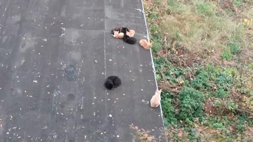 猫のかたまりを見る猫
