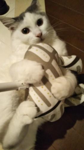 猫がクッションとプロレスしている写真