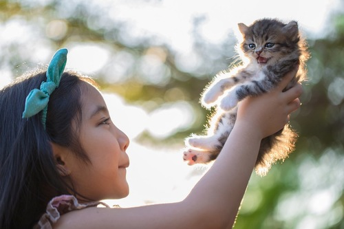 子猫を抱き上げている女の子