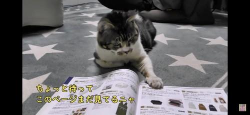 本を触る猫