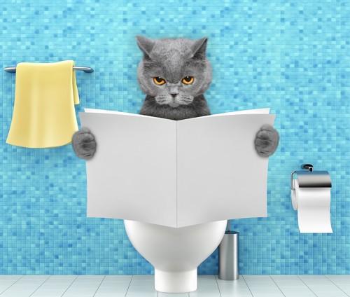 トイレで本を読む猫