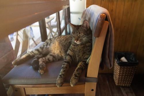カフェの椅子で寝ている猫