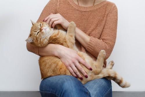 抱かれてタッチされる猫