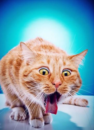 吐きそうになっている猫