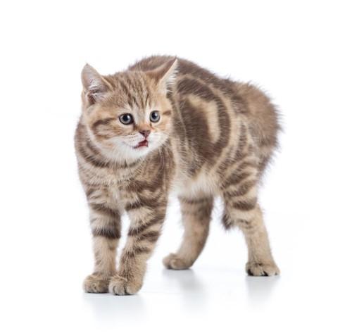 毛を逆立てている猫