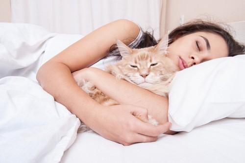飼い主と寝る猫