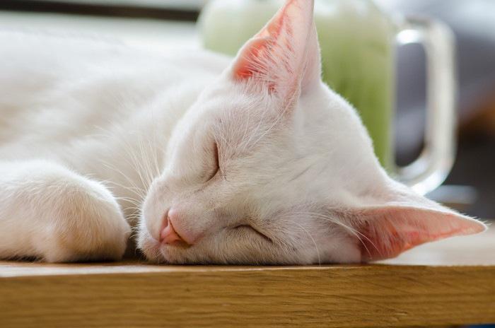 眠るカオマニー