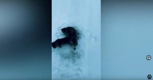 雪に埋もれる3匹の子猫