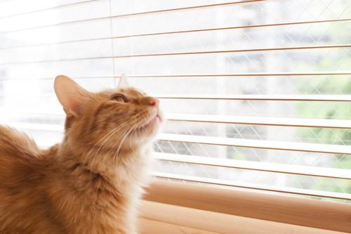 思いを馳せる猫