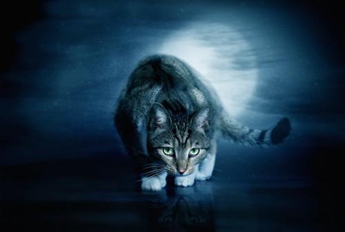 暗闇の中で獲物を狙う猫