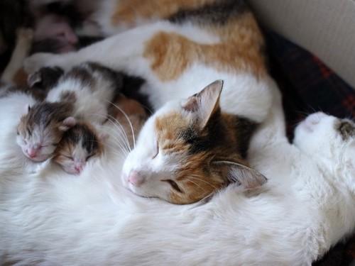 出産食後の親子猫