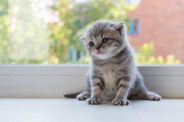 横山由依さんの家にいそうな猫
