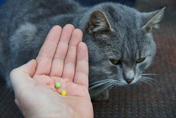 手に乗せた錠剤を見る猫