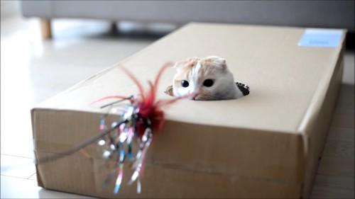 おもちゃを見つめる猫