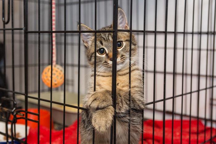 ケージから足を出す猫の写真