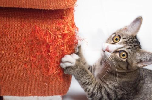 爪を研ぐ猫