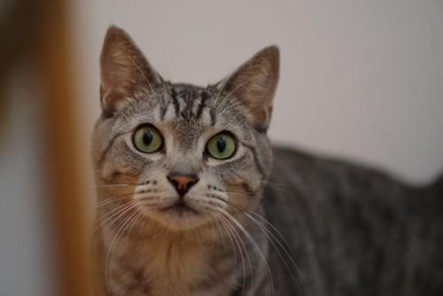 壁の向こう側で驚いた顔をした猫