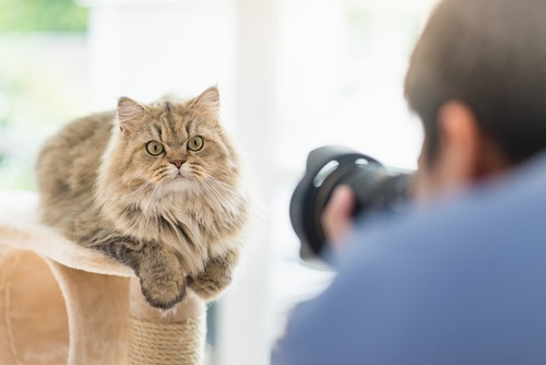 猫の写真を撮る男性の後ろ姿