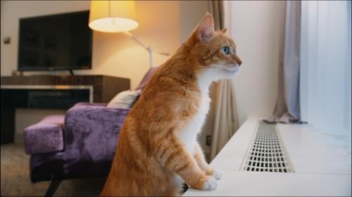 窓を見る猫