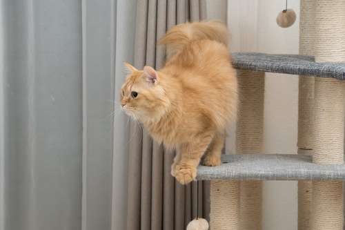 キャットタワーに登っている猫